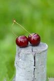 Kirschen auf einem Baumstumpf Stockfotos