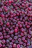 Kirschen an einem Markt Draufsicht des neuen reifen Kirschhintergrundes Roter Kirschhintergrund Lizenzfreie Stockfotografie