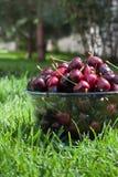 Kirschen in einer Schüssel auf dem Gras. Vertikale Position Stockfotos