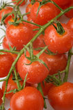 Kirschtomaten auf der Rebe Stockfotos