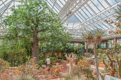 Kirstenbosch全国植物园的音乐学院 免版税库存图片