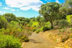 Kirstenbosch在开普敦 免版税图库摄影