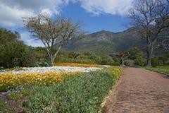Kirstenbosch庭院 图库摄影