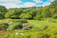 Kirstenbosch开普敦 库存图片