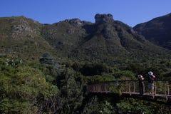 Kirstenbosch植物园开普敦 库存图片