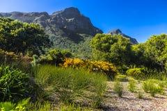 Kirstenbosch,开普敦 库存图片