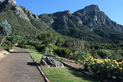 Kirstenbosch Stock Photography