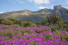 Kirstenbosch stockfotos