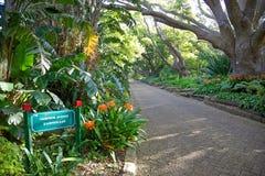 Kirstenbosch Stockbild