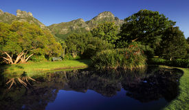 Kirstenbosch Botanical Garden Royalty Free Stock Photography