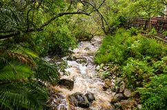 Kirstenbosch Botanical Gardens in Cape Town � South Africa Stock Image