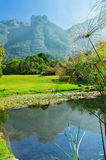 Kirstenbosch botanical gardens Royalty Free Stock Photography