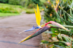 Kirstenbosch Botanical Gardens in Cape Town – South Africa Stock Photography