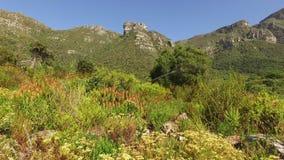 Kirstenbosch botanical gardens - Cape Town stock video footage