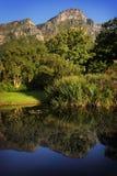 Kirstenbosch botanisk trädgård Arkivfoton