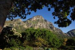 Kirstenbosch botanisk trädgård Royaltyfri Foto