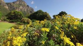 Kirstenbosch botaniska trädgårdar - Cape Town lager videofilmer
