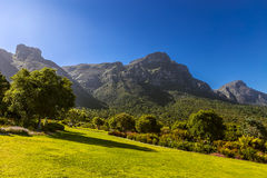Kirstenbosch, Cape Town royalty free stock image