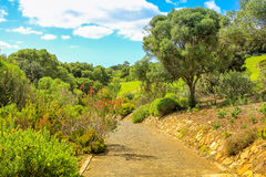 Kirstenbosch in Cape Town Royalty Free Stock Photography