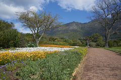 Kirstenbosch Gardens Stock Photography