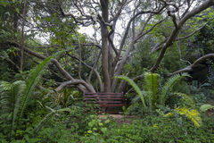 Kirstenbosch Gardens bench under a tree Royalty Free Stock Images
