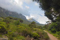 Kirstenbosch Gardens on a partly cloudy day Royalty Free Stock Photo