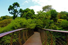 Kirstenbosch national botanical garden Royalty Free Stock Images