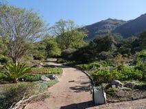 Kirstenbosch nationaler botanischer Garten Stockfotografie