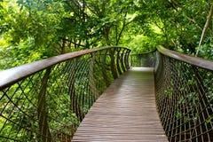 kirstenbosch ogrodu botanicznego krajowe Zdjęcie Royalty Free