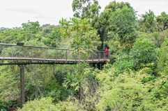 Kirstenbosch Tree Canopy Walkway, the Boomslang Royalty Free Stock Images