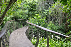 Kirstenbosch Tree Canopy Walkway, the Boomslang Stock Photos