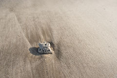 Kiselsten på strandsanden Royaltyfria Bilder