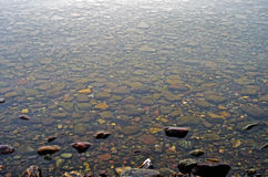 Kiselstenar i sjön på glaciärnationalparken Royaltyfria Bilder