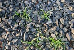 Kiselstenar och gräs Arkivfoto