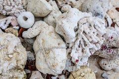 Kiselstenar och koraller, Boracay ö, Filippinerna Royaltyfri Fotografi