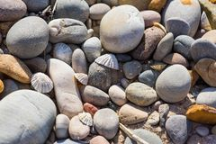 Kiselstenar och skålsnäckaskal på en strand arkivbild
