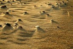 Kiselstenar på sanden Fotografering för Bildbyråer
