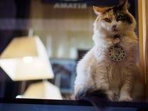 Kishi, Ιαπωνία - 7 Οκτωβρίου: Σταθμός κύριο Nitama γατών μέσα στο καθήκον στις 7 Οκτωβρίου σε Kishi, Ιαπωνία Στοκ εικόνες με δικαίωμα ελεύθερης χρήσης