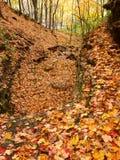 Kishwaukee Gorge Forest Preserve Illinois. Autumn leaves blanket the landscape of Kishwaukee Gorge Forest Preserve in Illinois Royalty Free Stock Images