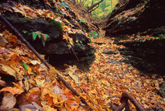 Kishwaukee Gorge Forest Preseve. Beautifully colored fall leaves fill a canyon at Kishwaukee Gorge Forest Preserve in northern Illinois Royalty Free Stock Image