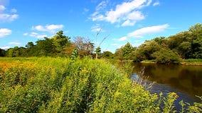 Kishwaukee rzeka i cierkanie ptaki zbiory