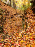 Kishwaukee-Schlucht Forest Preserve Illinois Lizenzfreie Stockbilder