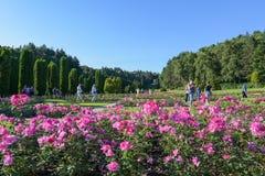 Kislovodsk, Russland - Juli 2017: Rose Valley im Erholungsortpark Stockfotos