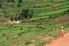 Kisoro - Uganda, Africa Stock Photos