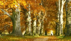 Kiss in the autumn alley. Beautiful autumn alley in Lancut in Poland Royalty Free Stock Images
