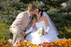 Kiss of bride and groom Royalty Free Stock Image