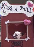 Kiss a Bull Royalty Free Stock Photo