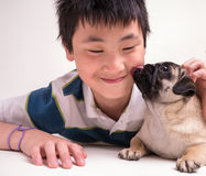 A kiss from a cute pet puppy. An adorable cute pet pug puppy gives his boy a lick on the face Royalty Free Stock Photos