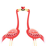 Kiss flamingos Stock Images