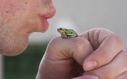 Kiss the frog. Tree frog Royalty Free Stock Photo